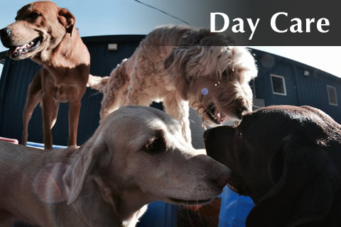 Dog Day Care Columbia Sc